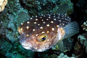 Pesce rosso cerca di aiutare compagno d 39 acquario for Quanto vive un pesce rosso